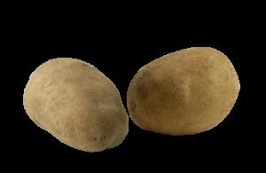patata-agria-2